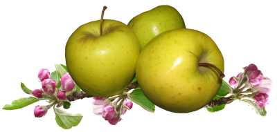 Apples, Apple Blossom, Fruit, GardeningApples Apple Blossom Fruit Gardening.png
