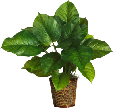 PNG images, PNGs, Plant, Plants,  (9).png