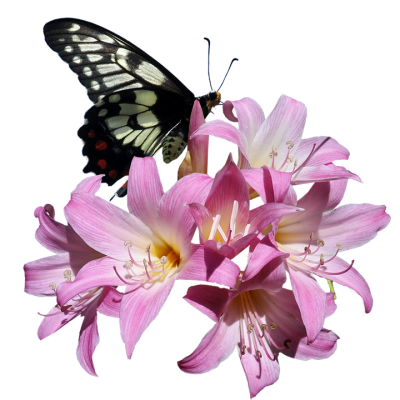 butterfly-3258268_960_720.png