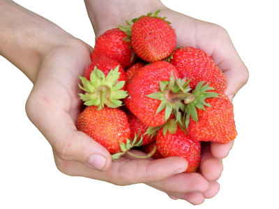 Strawberry PSD file with attached free transparent PNG images