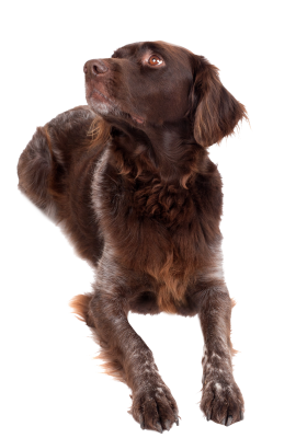 Dog-1192031 PSD file with small and medium free transparent PNG images