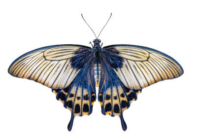 Nature, Animals, Butterfly, Insect, Flying, Wing, ProbeNature Animals Butterfly Insect Flying Wing Probe (2).png