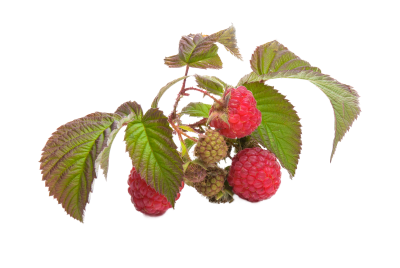 Raspberry, Fruit, RedRaspberry Fruit Red.png