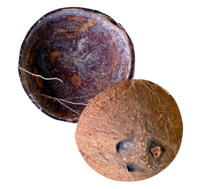 PNG images-Coconut-Shell-PNG-Transparent-Image.png