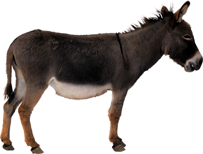 PNG images Donkey (8).png