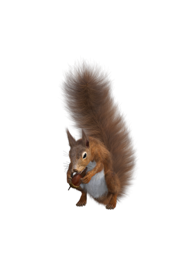 squirrel-2847192_960_720.png