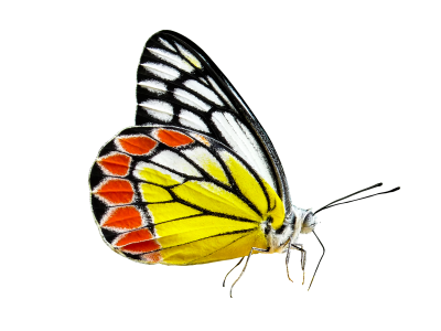 PNG images Butterfly (25).png