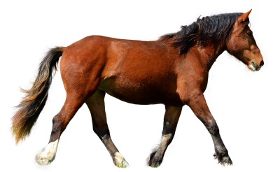 Horse, Isolated, Brown, Animal, Brown Horse, Mane, RideHorse Isolated Brown Animal Brown Horse Mane Ride.png