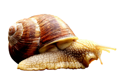 Snail, Animal, House, Crawl, Shell, Cut Out, ExemptionSnail Animal House Crawl Shell Cut Out Exemption.png