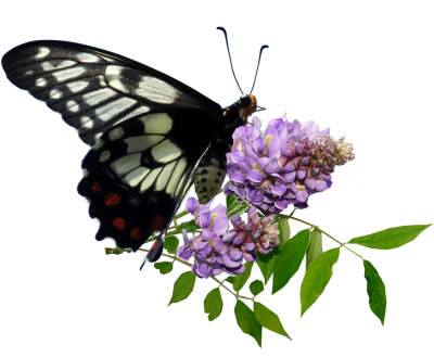 butterfly-3229826_960_720.png