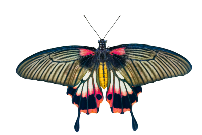 Nature, Animals, Butterfly, Insect, Flying, Wing, ProbeNature Animals Butterfly Insect Flying Wing Probe (4).png