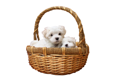 Dog-1027549 PSD file with small and medium free transparent PNG images