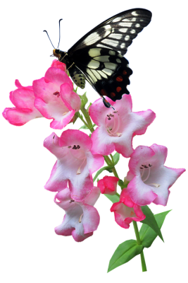 butterfly-3241653_960_720.png