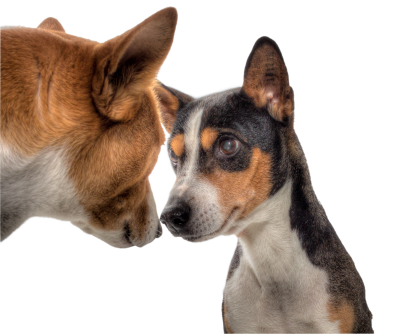 Dogs-602890 PSD file with small and medium free transparent PNG images