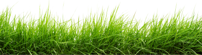 PNG images Grass (19).png