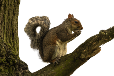squirrel-1055175_960_720.png