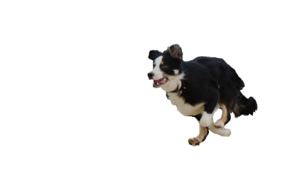 Running-dog-747751 PSD file with small and medium free transparent PNG images