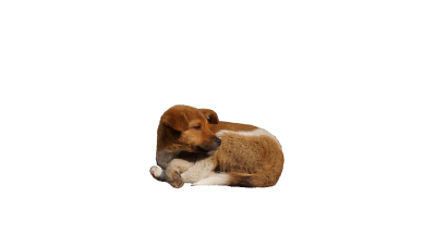 Dog-1151195 PSD file with small and medium free transparent PNG images