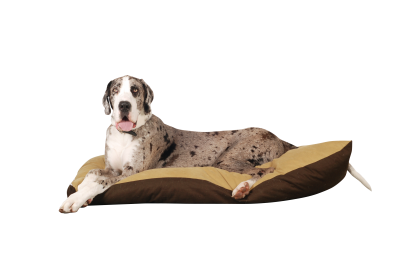 Dog-1143693 PSD file with small and medium free transparent PNG images