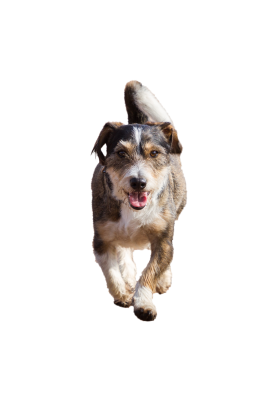 Dog-1134500 PSD file with small and medium free transparent PNG images