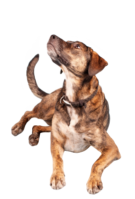 Dog-1192033 PSD file with small and medium free transparent PNG images