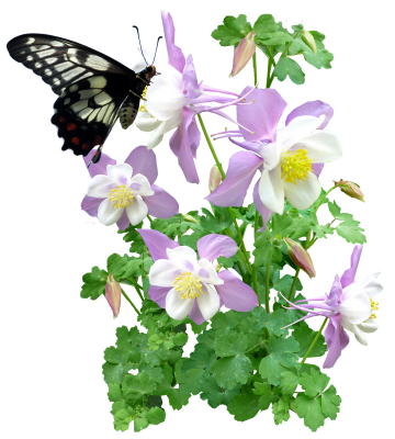 Butterfly, Insect, Flowers, SummerButterfly Insect Flowers Summer.png