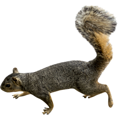 PNG images Squirrel (23).png