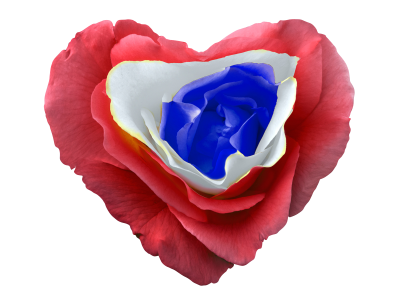 Heart-1190203 PSD file with small and medium free transparent PNG images