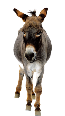 PNG images Donkey (21).png