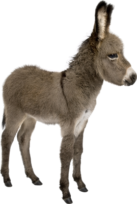 PNG images Donkey (13).png