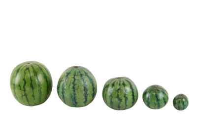 watermelon-715608_Clip.png