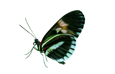 papilio-44882 PSD file with small and medium free transparent PNG images