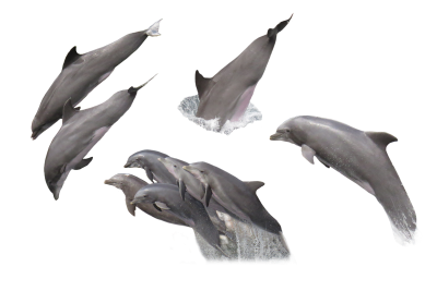 Dolphins, Pinball, Isolated, Sea, MammalDolphins Pinball Isolated Sea Mammal.png