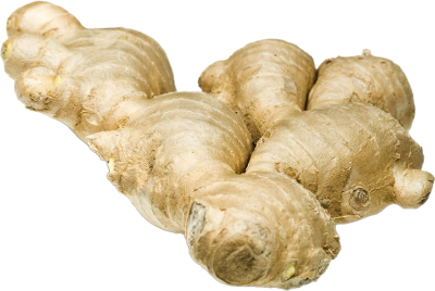 PNG images Ginger (2).png