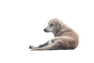 Dog-1068275 PSD file with small and medium free transparent PNG images