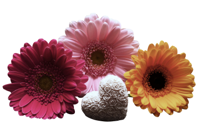 Gerbera-1150174 PSD file with small and medium free transparent PNG images