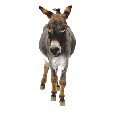 PNG images Donkey (14).png