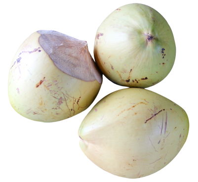 Top-View-of-Coconut-PNG-image.png