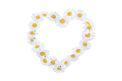 Daisy-722281 PSD file with small and medium free transparent PNG images