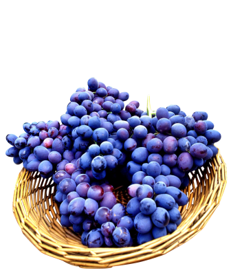 PSD files seedless-grapes-139645_Clip.png