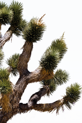 Tree, Isolated, Nature, HeatTree Isolated Nature Heat.png