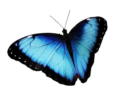 butterfly-3192737_960_720.png