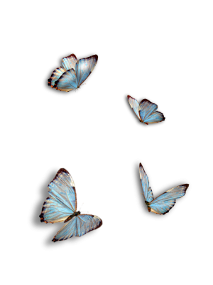 Butterflies, Blue, Insect, IsolatedButterflies Blue Insect Isolated.png