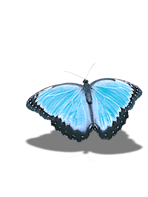 Butterfly, Without Background, Shadow, Craft MaterialsButterfly Without Background Shadow Craft Materials.png