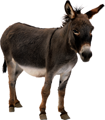 PNG images Donkey (6).png