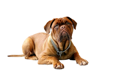 Dog-734688 PSD file with small and medium free transparent PNG images