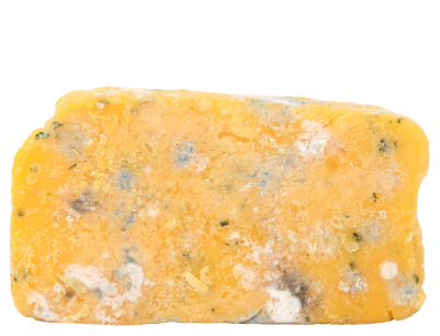 PSD files: Old mouldy cheese