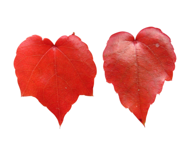 Leaves-1012948 PSD file with small and medium free transparent PNG images