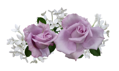 Mauve, Rose, With, White, FlowersMauve Rose With White Flowers.png