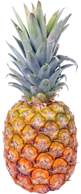 Isolated, Pineapple, Fruit, Beach, Caribbean, VacationsIsolated Pineapple Fruit.png